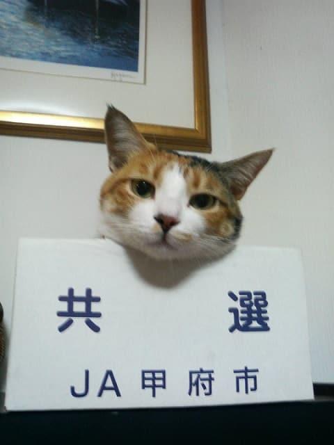 三毛猫のふくちゃん