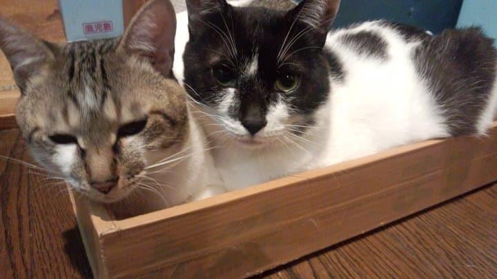 トニーとニコラウス 兄弟ネコ