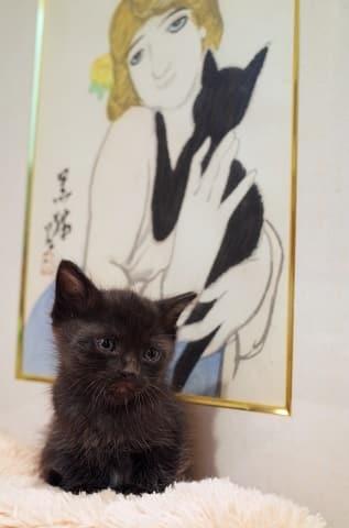 ノラ猫のトトロが赤ちゃん、黒猫です。